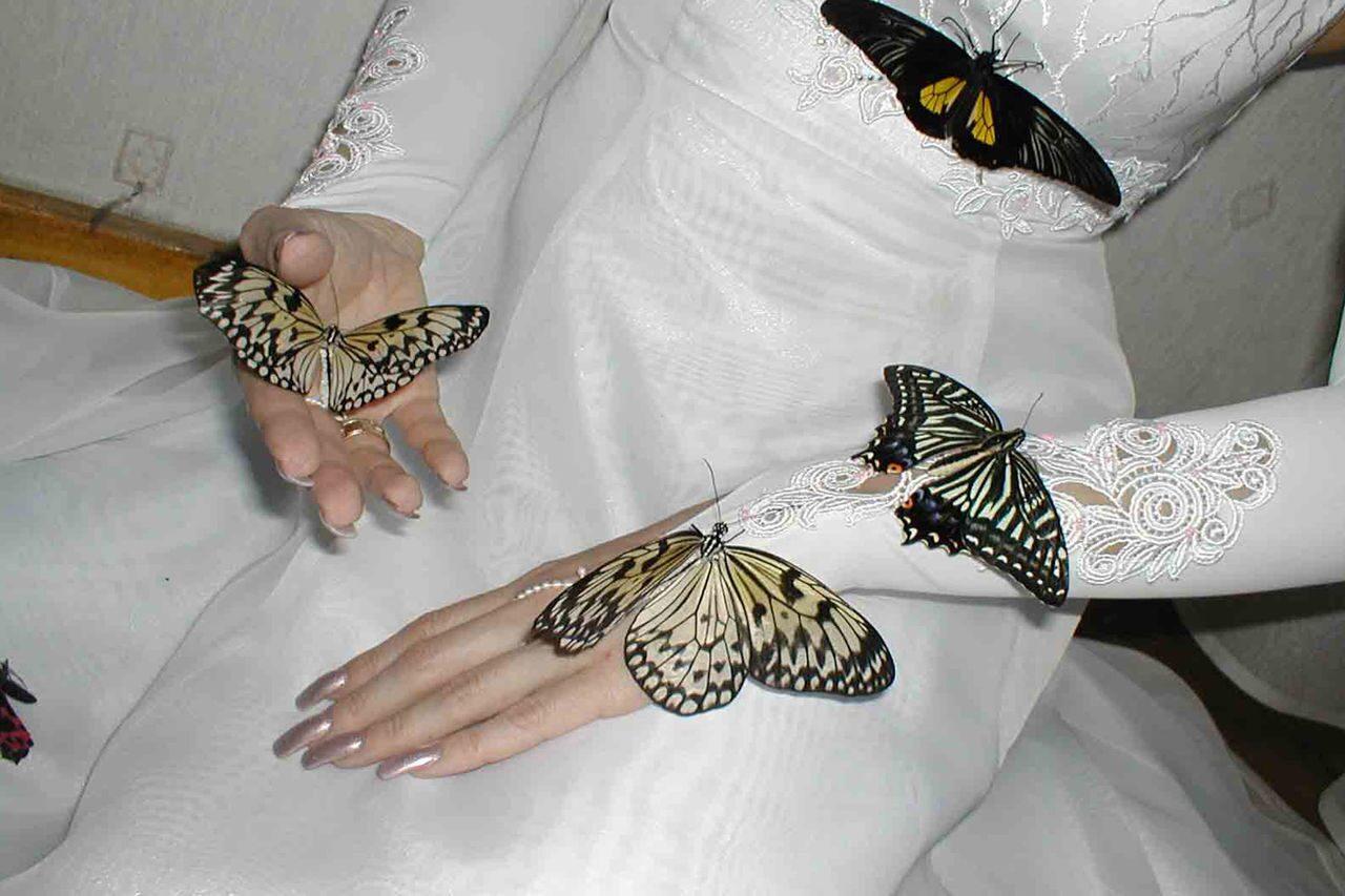 живые картинки бабочки